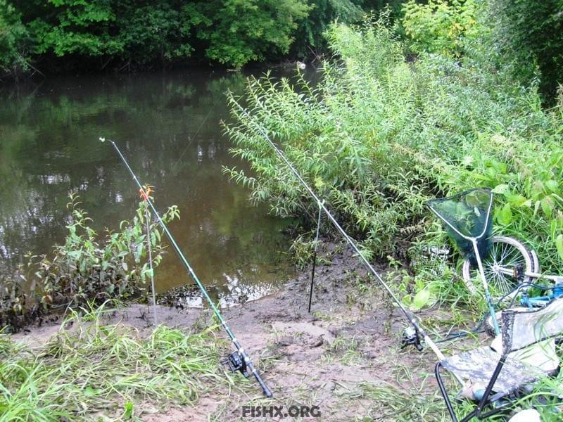 Ловля плотвы летом на фидер