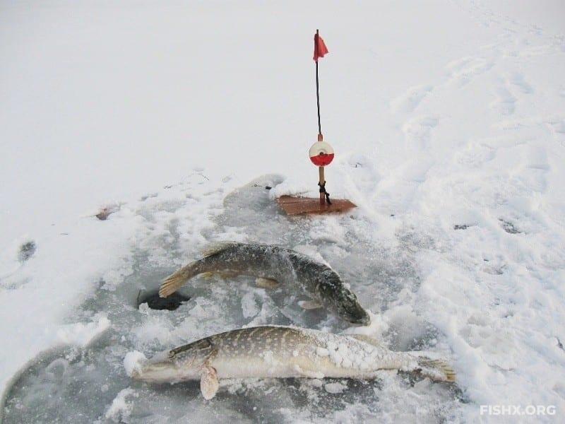 Ловля щуки на жерлицы по первому льду