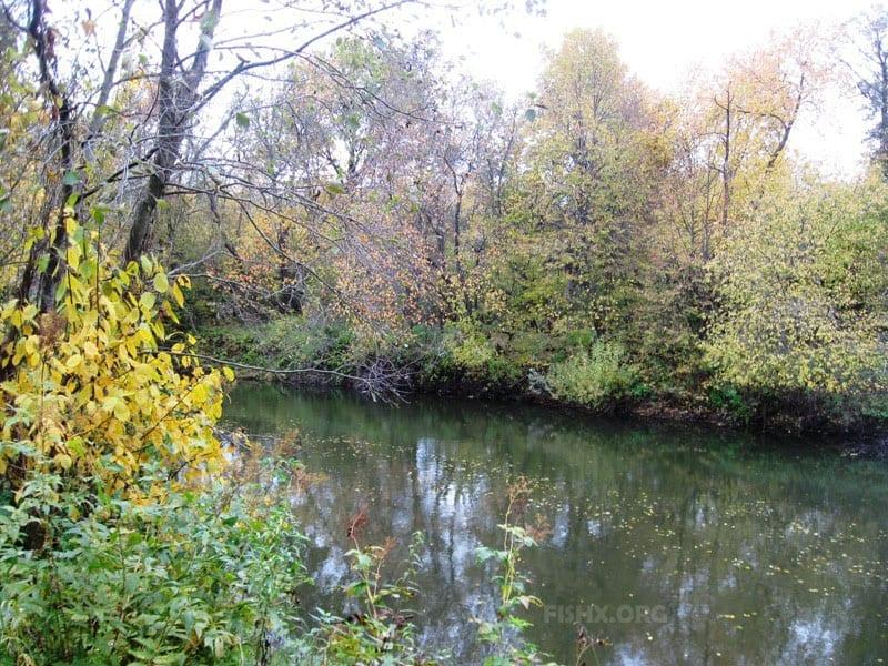Осенняя рыбалка на пригородной узкой Кокшаге