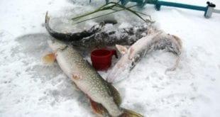 Зимний улов на водохранилище