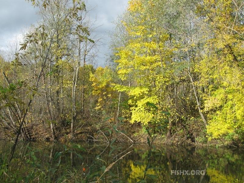 Рыбалка на малой реке в октябре