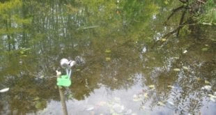 Ловля хищника осенью на реке