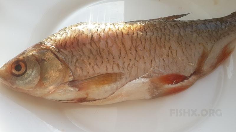 Почищенная рыба для приготовления в соляном панцире