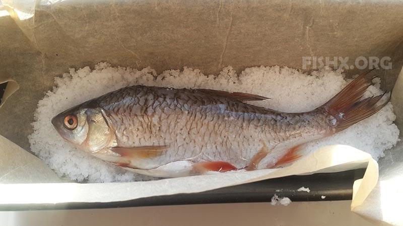 Рыбу засыпаем солью