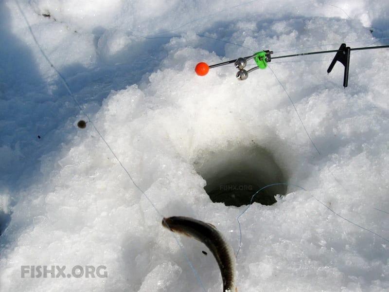 Ловля зимой на фидер