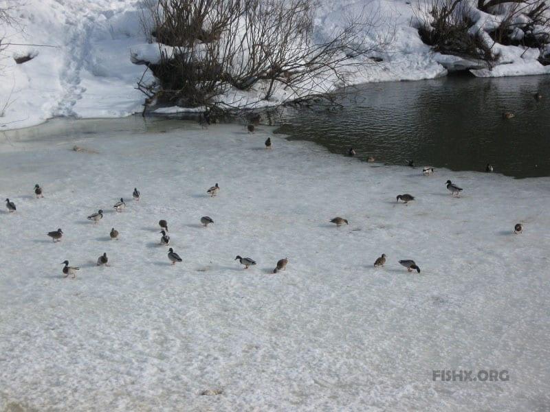 Опасный весенний лёд