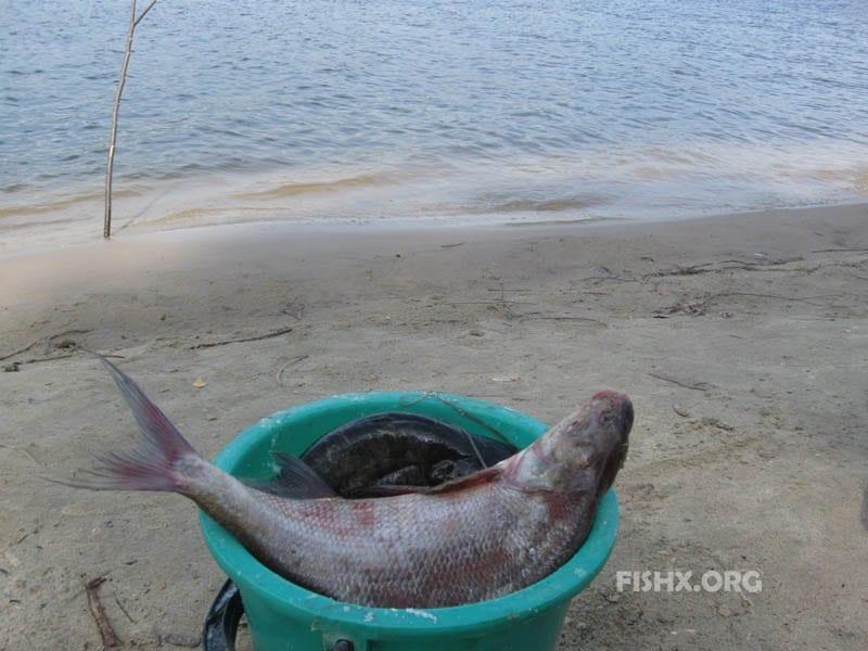 Поймали по ведёрку рыбки