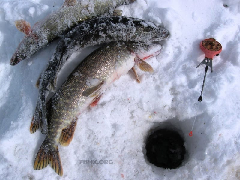 Ловля щуки по первому льду