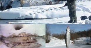 Уклейки и судаки - отчёт с рыбалки