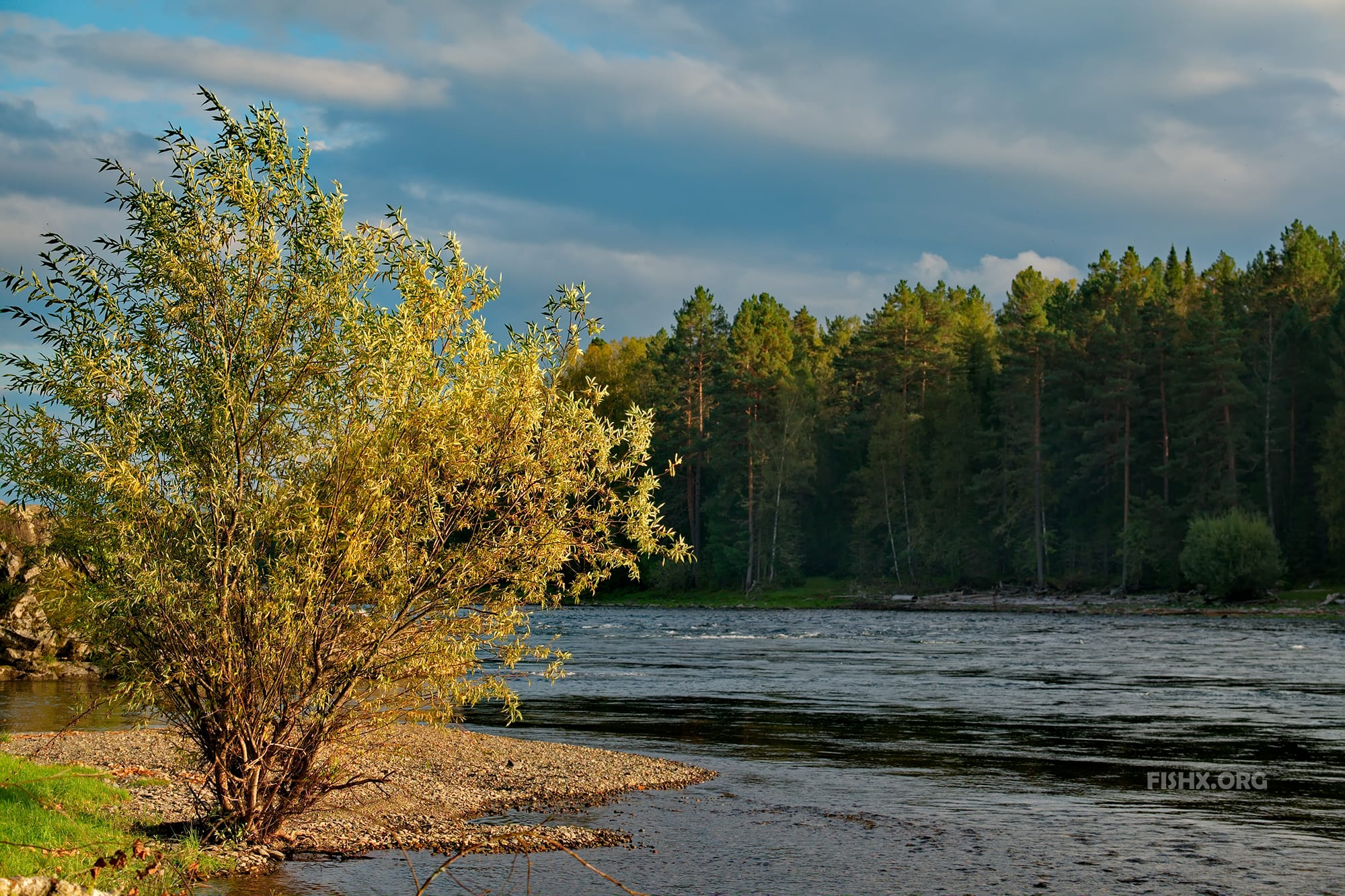 Солнечный вечер на реке Бия