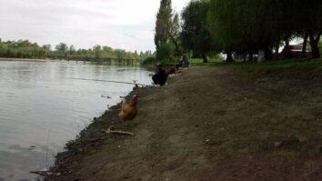 Рыболовы и курицаворовка