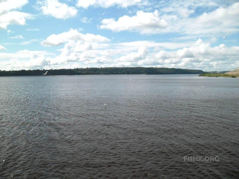 Лещ в конце лета на больших реках