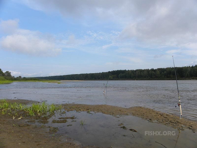 Рыболовное место на реке Ветлуга, в районе деревни Галибихи