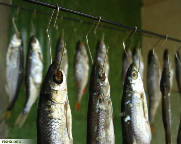 Сушка рыбы