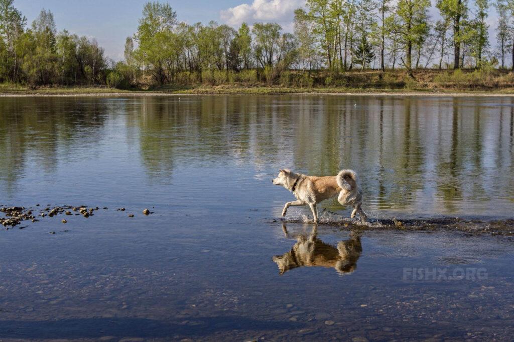 Собака рыболов
