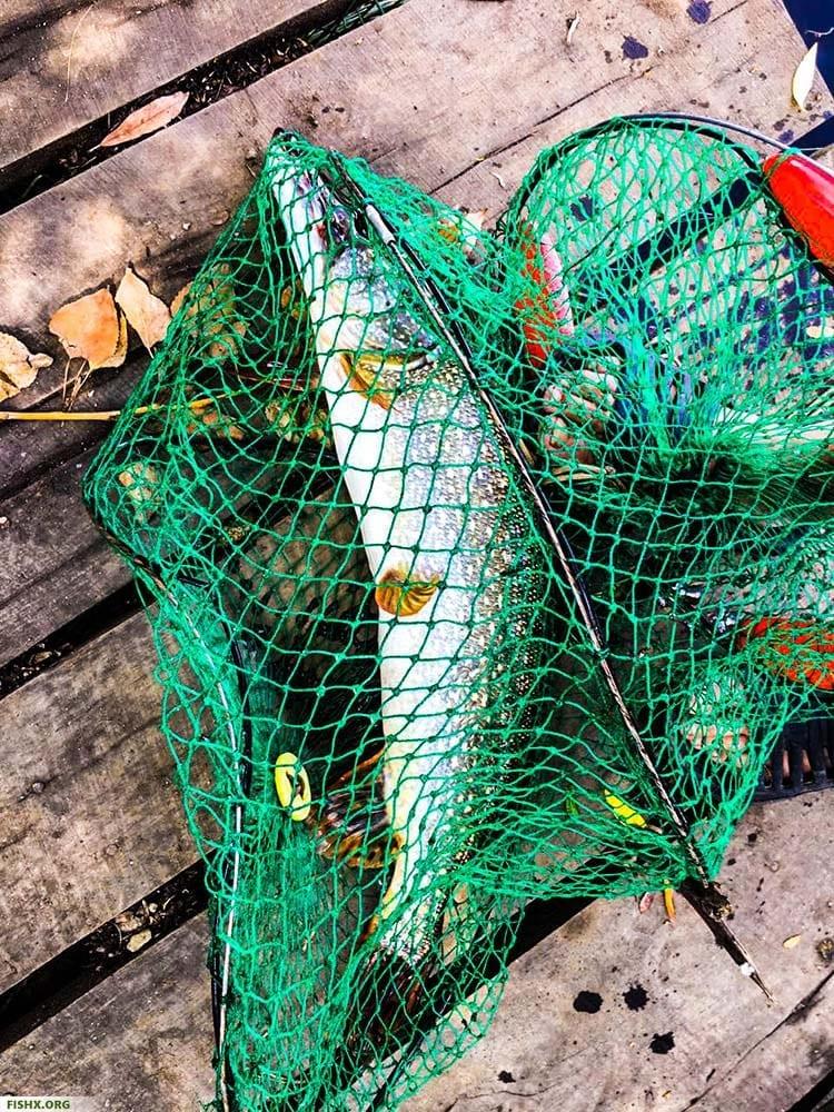 Ловля хищной рыбы на спиннинг
