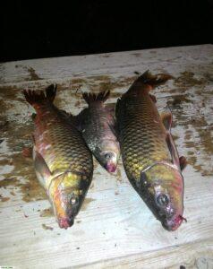 Рыба, пойманная на рыбалке
