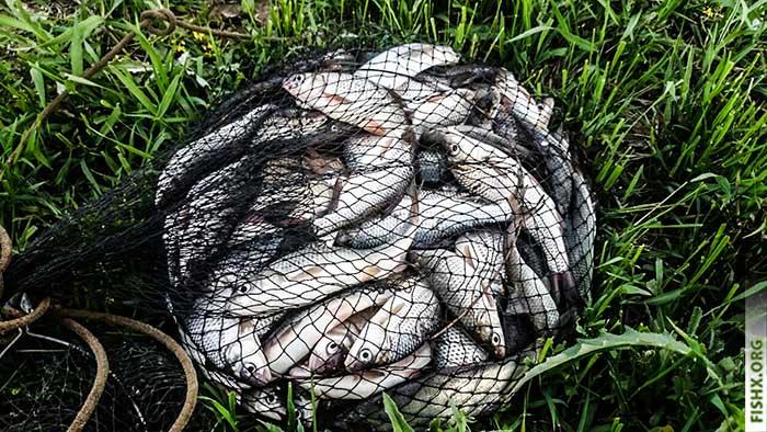 Рыба пойманная на городском канале