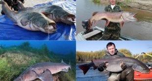 Самые крупные рыбы России