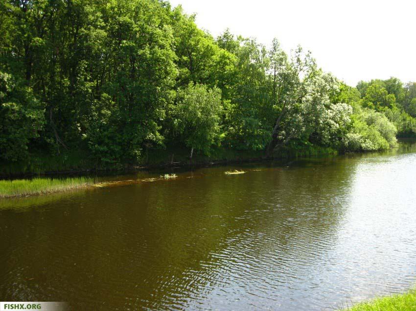 Щука на малых реках