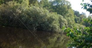Смекалка на рыбалке