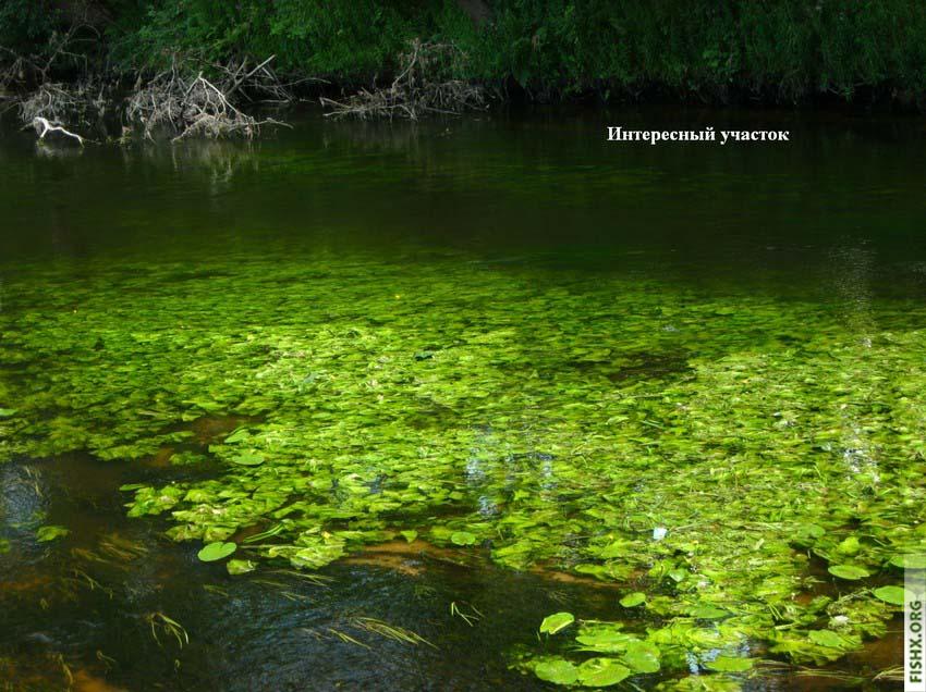 Воблер на малой реке